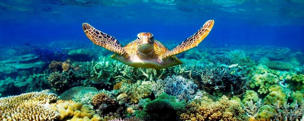 Faire de la plongée durant ton stage au Mexique